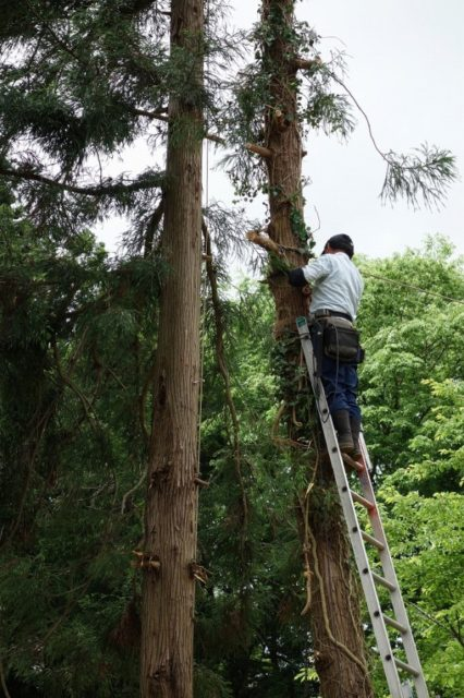 墓地立ち木伐採